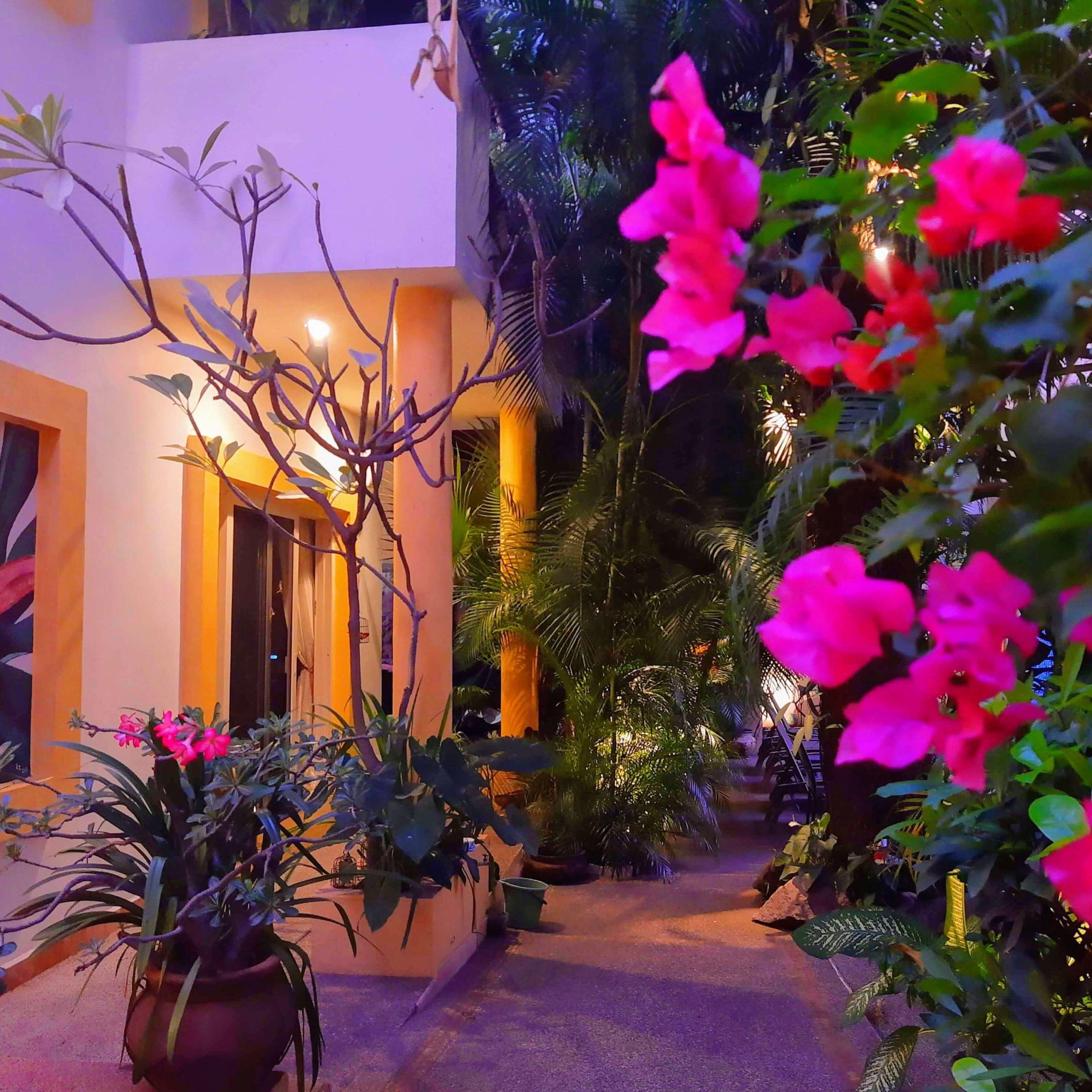The garden at Hacienda Alemanalit by moonlight